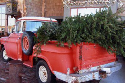 Vintage-truck-&-tree-copy