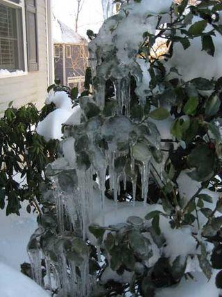 Jan.-ice
