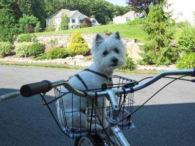 Ivy-biking