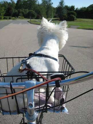Ivy-biking2